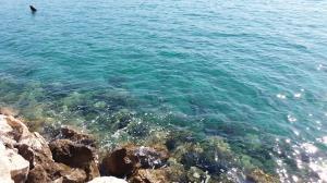 A sziget (13)